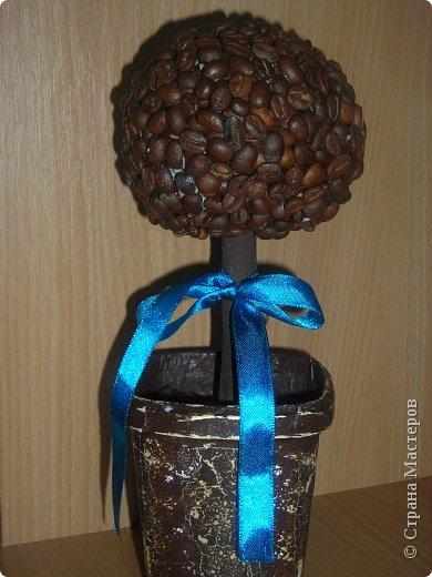 Эх, кофейное дерево! фото 1