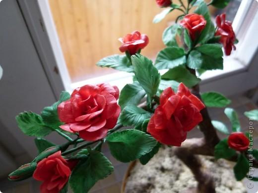 Розовое деревце, типа бансай. Сделано из глины модерн. Сама бы наврятли взялась за такую большую работу, на курсах дали задание и вот что получилось. фото 5