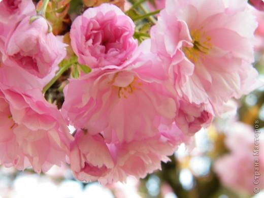 Какие-то маленькие цветочки.  Но вблизи очень красивые! фото 3