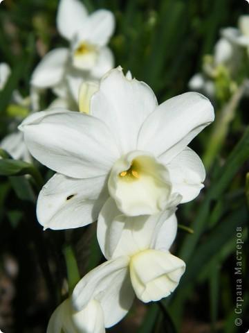 Какие-то маленькие цветочки.  Но вблизи очень красивые! фото 8