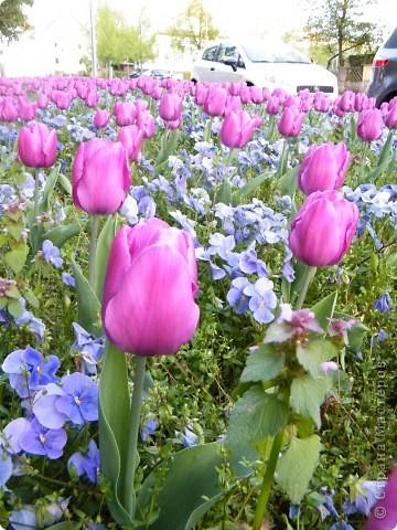 Какие-то маленькие цветочки.  Но вблизи очень красивые! фото 14