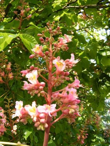 Какие-то маленькие цветочки.  Но вблизи очень красивые! фото 13