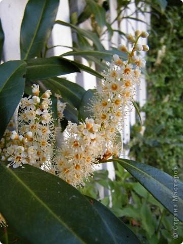 Какие-то маленькие цветочки.  Но вблизи очень красивые! фото 15