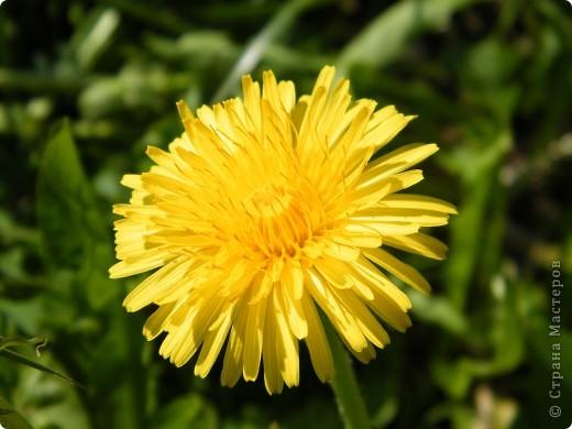 Какие-то маленькие цветочки.  Но вблизи очень красивые! фото 18