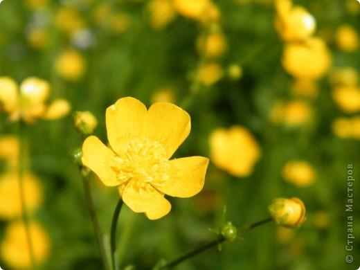 Какие-то маленькие цветочки.  Но вблизи очень красивые! фото 20