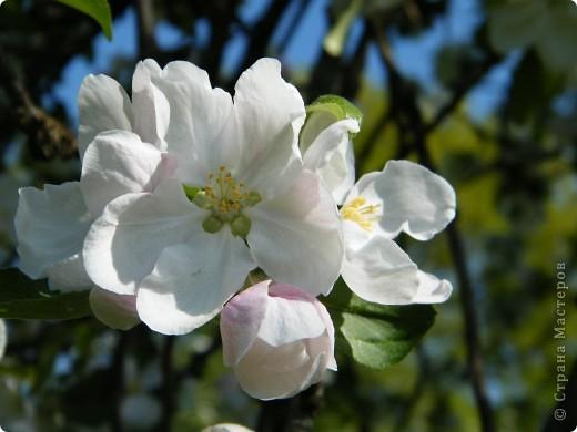 Какие-то маленькие цветочки.  Но вблизи очень красивые! фото 21
