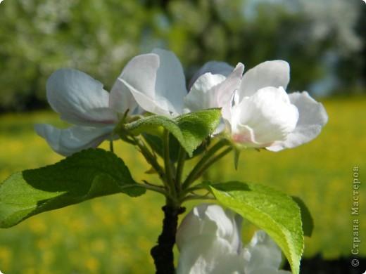 Какие-то маленькие цветочки.  Но вблизи очень красивые! фото 22