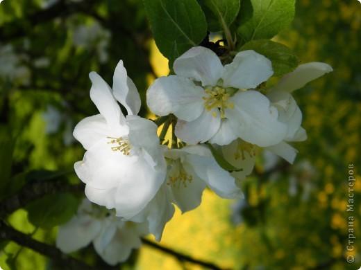 Какие-то маленькие цветочки.  Но вблизи очень красивые! фото 23