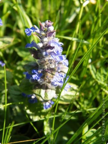 Какие-то маленькие цветочки.  Но вблизи очень красивые! фото 19