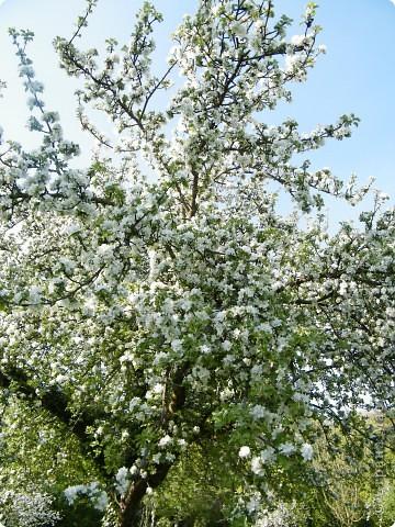 Какие-то маленькие цветочки.  Но вблизи очень красивые! фото 31