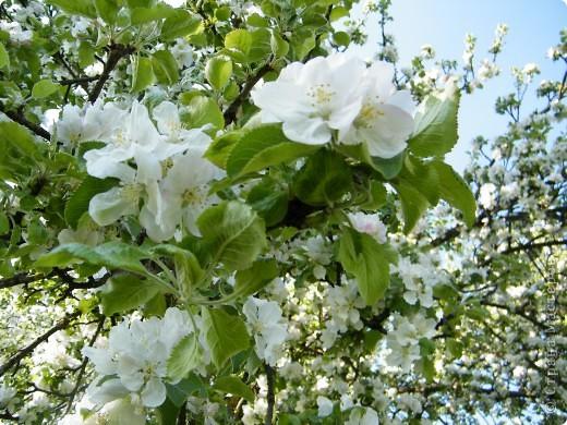 Какие-то маленькие цветочки.  Но вблизи очень красивые! фото 32
