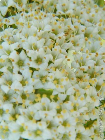 Какие-то маленькие цветочки.  Но вблизи очень красивые! фото 29