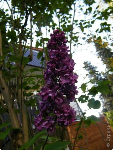 Какие-то маленькие цветочки.  Но вблизи очень красивые! фото 27