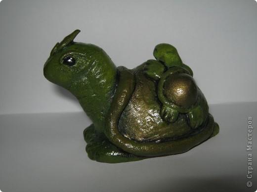 Черепахомания фото 3