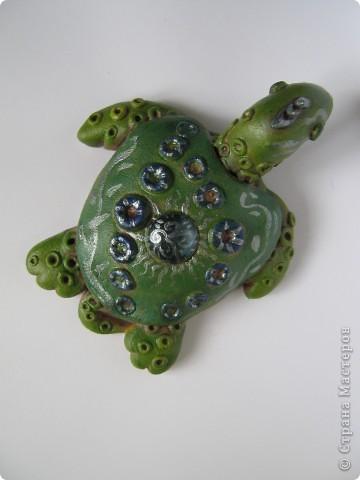 Черепахомания фото 1