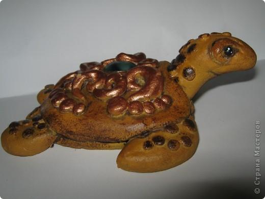 Черепахомания фото 4