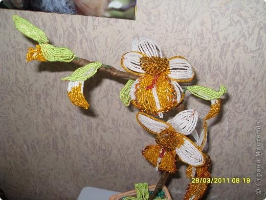 Моя орхидея  фото 2
