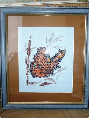 Бабочка в тростнике фото 1