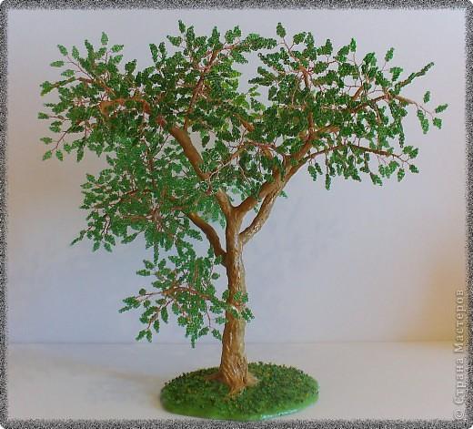 В моем лесу прибавление - выросло зеленое дерево неизвестной породы. 5 мое дерево в общем зачете. фото 1