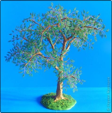 В моем лесу прибавление - выросло зеленое дерево неизвестной породы. 5 мое дерево в общем зачете. фото 2