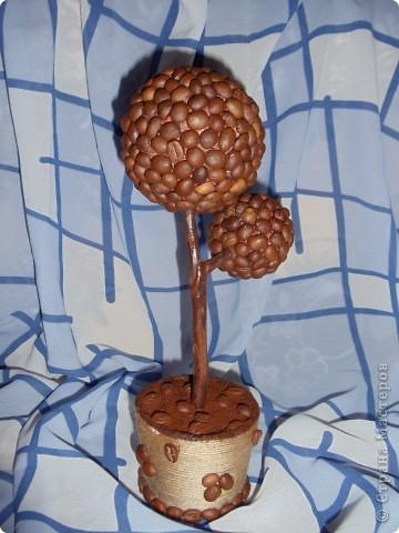 Кофейное дерево. фото 1