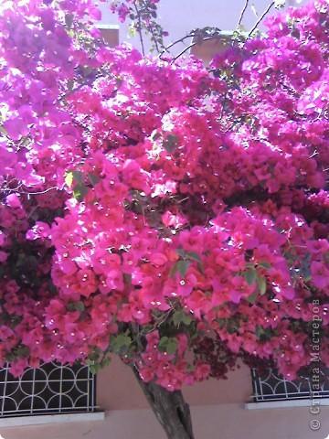 Дерево в цветах. фото 3