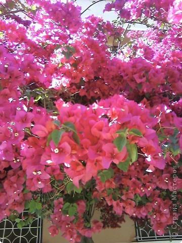 Дерево в цветах. фото 1