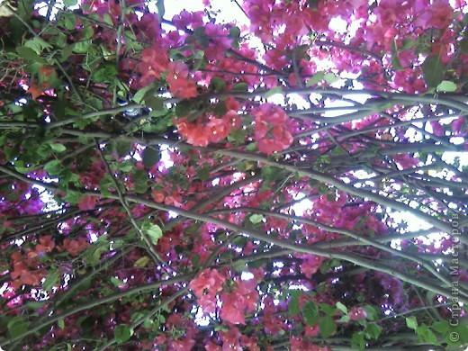 Дерево в цветах. фото 4