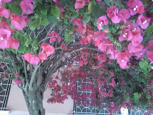 Дерево в цветах. фото 5