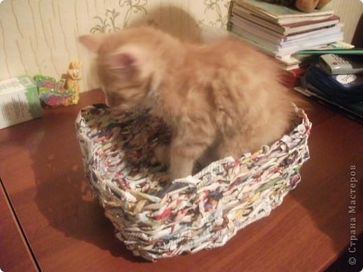 Плела корзинку для яиц, а Тимошка все помогал. Думает: для него... Примерился... А хвост не входит, что такое!.. фото 2