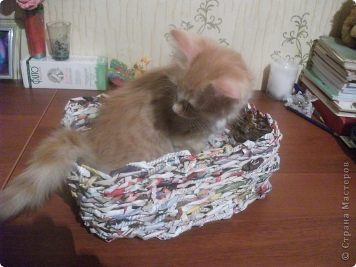 Плела корзинку для яиц, а Тимошка все помогал. Думает: для него... Примерился... А хвост не входит, что такое!.. фото 1