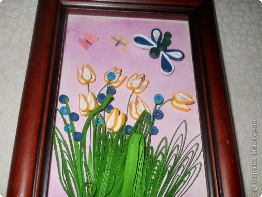 Это тюльпаны фото 2