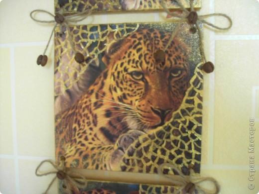 Мои леопарды... фото 3