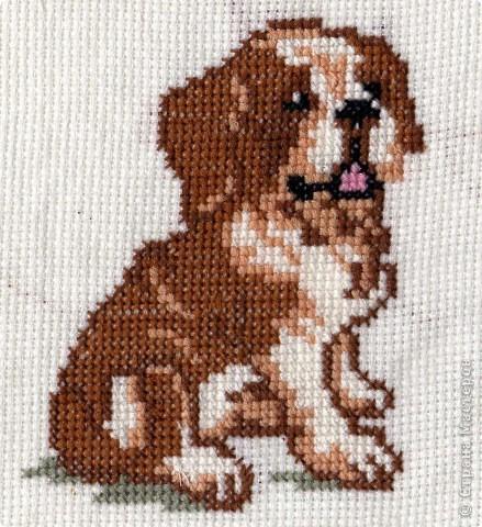 По-моему, это щенок сенбернара. Он вдохновил меня на следующие вышивки фото 1