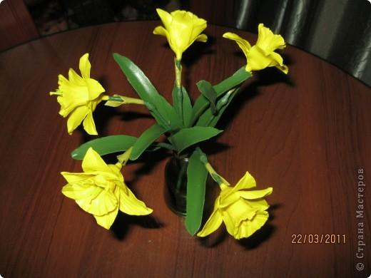 Нарциссы фото 2