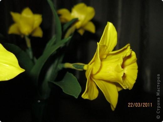 Нарциссы фото 3