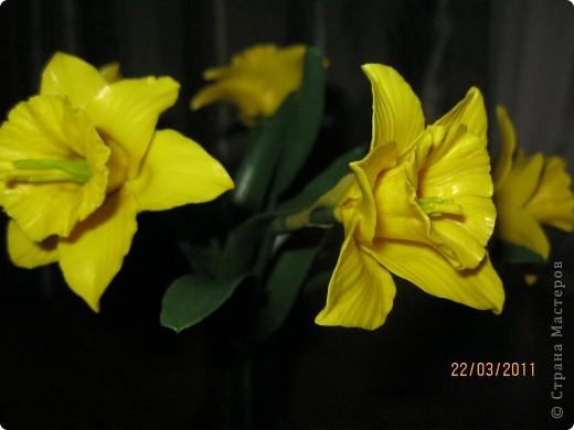 Нарциссы фото 4