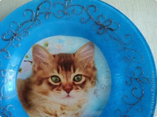 Пополнение тарелок фото 5