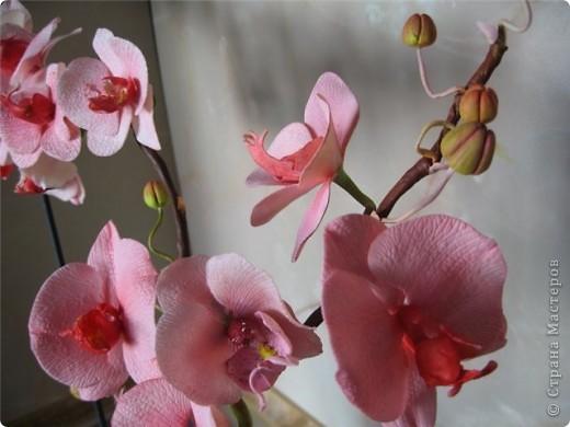 очередной горшочек с орхидеями фото 3