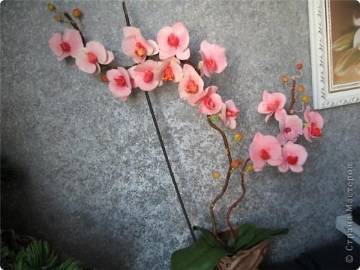 очередной горшочек с орхидеями фото 4