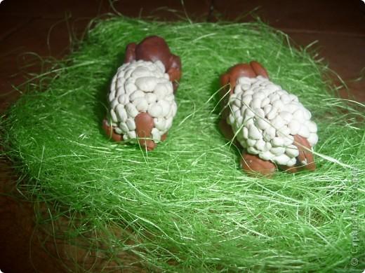 Это весёлые овечки на поле... фото 2