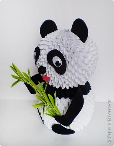 панда поиграть с овцами,