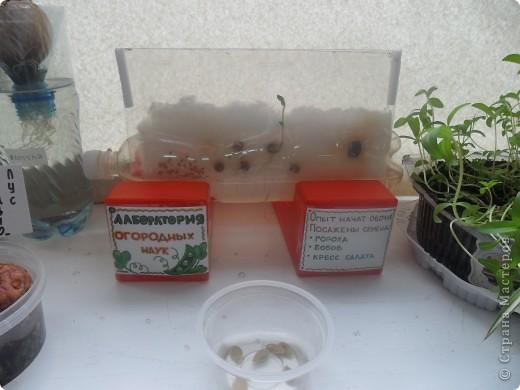 """Недавно в нашем детском саду прошел конкурс """" Огород на подоконнике"""". Наша группа заняла первое место. Хочу поделиться опытом, так как знаю, что в интернете подобного материала мало. фото 3"""
