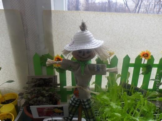 """Недавно в нашем детском саду прошел конкурс """" Огород на подоконнике"""". Наша группа заняла первое место. Хочу поделиться опытом, так как знаю, что в интернете подобного материала мало. фото 2"""