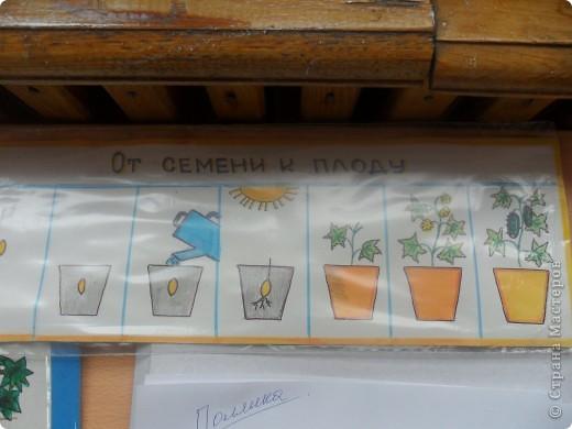 """Недавно в нашем детском саду прошел конкурс """" Огород на подоконнике"""". Наша группа заняла первое место. Хочу поделиться опытом, так как знаю, что в интернете подобного материала мало. фото 12"""
