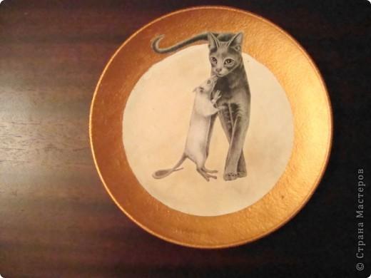 Кот& крыс фото 1