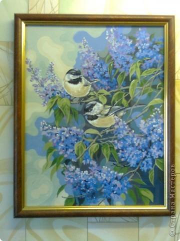 Синички в весенней сирени! фото 1