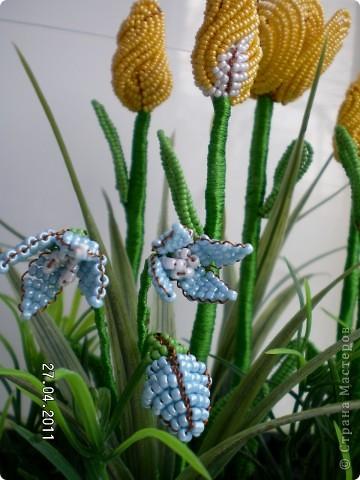Эта полянка с тюльпанчиками и первоцветами сделана в подарок для сестры.  фото 4