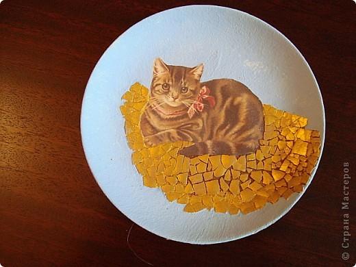 Кот& крыс фото 4
