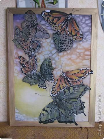 Бабочки )))))))) фото 1